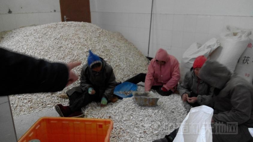 刘红卫:茯苓种植将因环保力度加大而受限